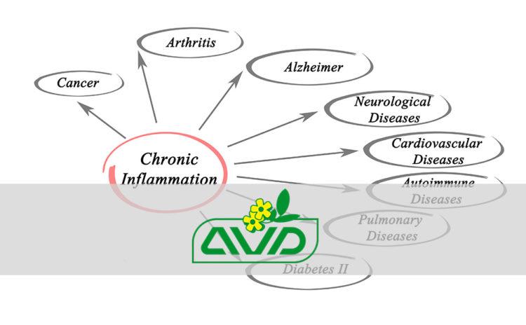 Glutatione – inflammaging – immunosenescenza
